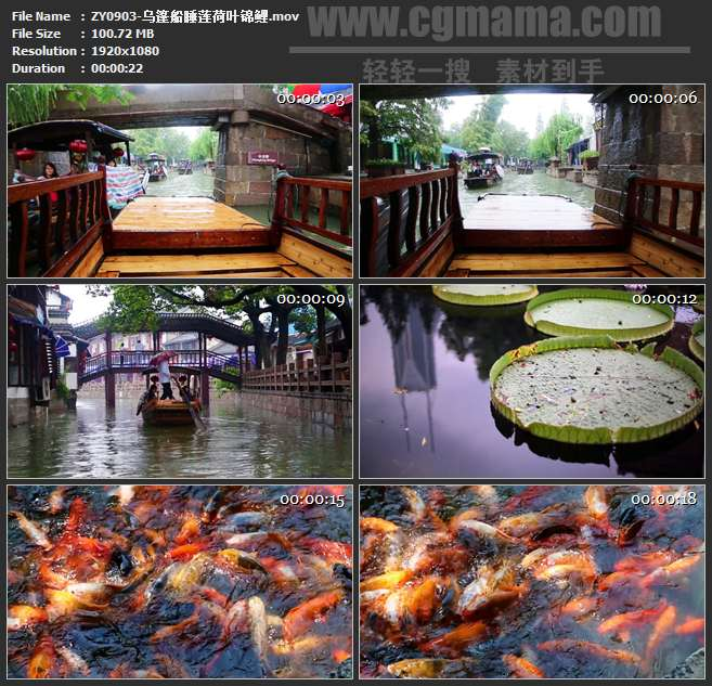 ZY0903-乌篷船睡莲荷叶锦鲤 高清实拍视频素材