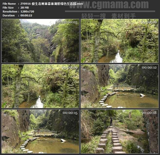 ZY0916-原生态树林森林湖桥绿色生态园 高清实拍视频素材