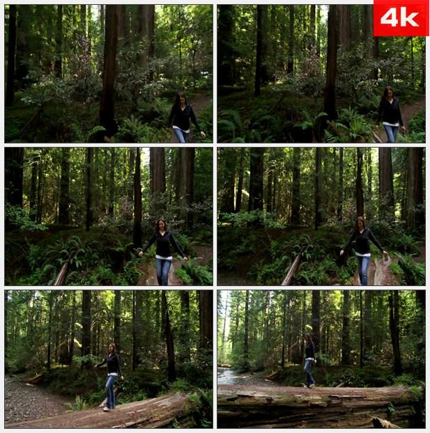 4K0000走在巨大的树上穿过河流高清实拍视频素材