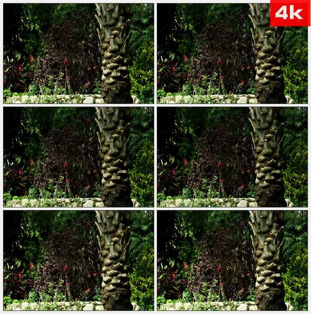 4K0003棕榈树干野花草丛灌木 高清实拍视频素材