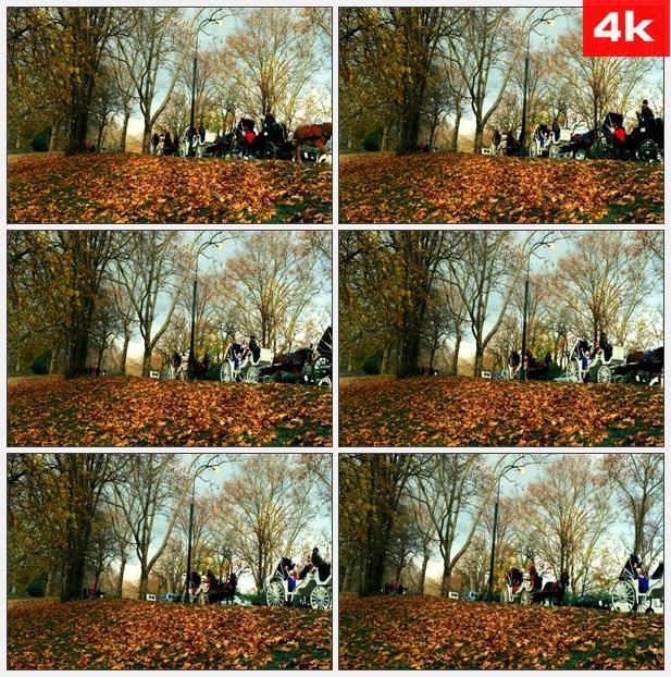 4K0010中央公园行驶的马车高清实拍视频素材