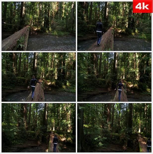 4K0019在红木森林走在倒下的树上 高清实拍视频素材
