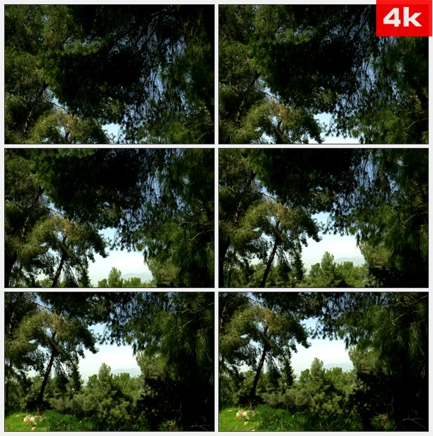 4K0057仰望树顶 蓝色的天空 高清实拍视频素材