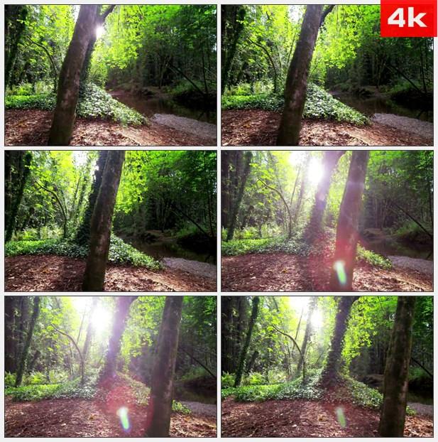 4K0065阳光照射树林里高清实拍视频素材