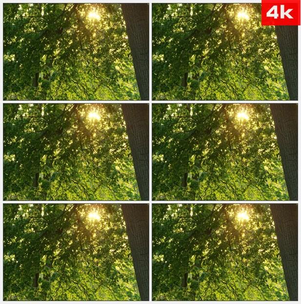 4k0066阳光照射深林高清实拍视频素材