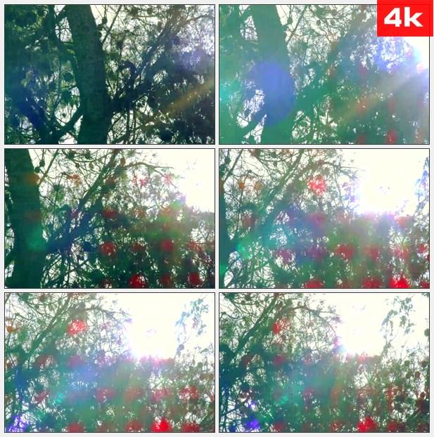 4K0081阳光穿过树枝 高清实拍视频素材