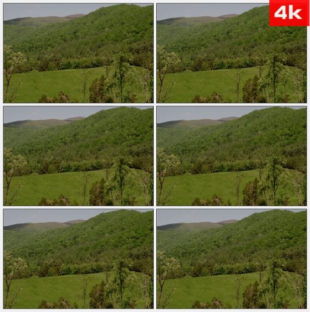 4K0178树覆盖范围-山地 高清实拍视频素材