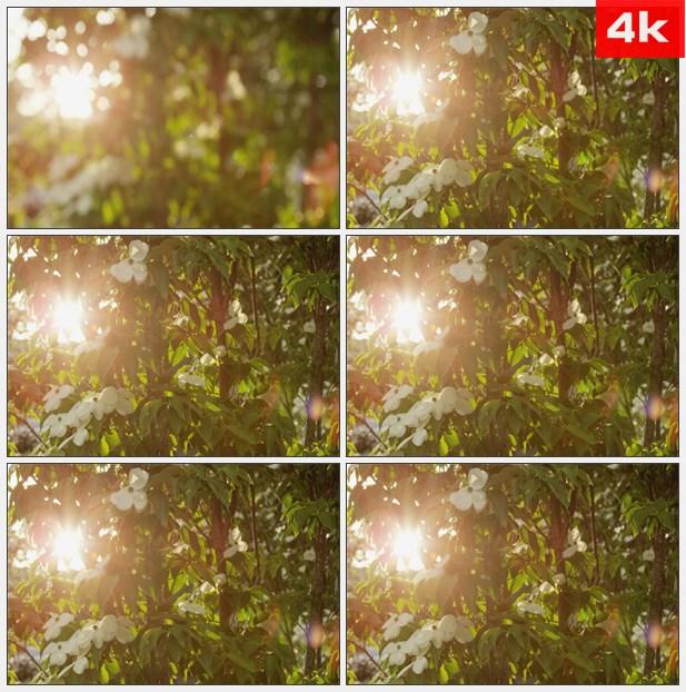4K0192深林里的太阳耀斑高清实拍视频素材