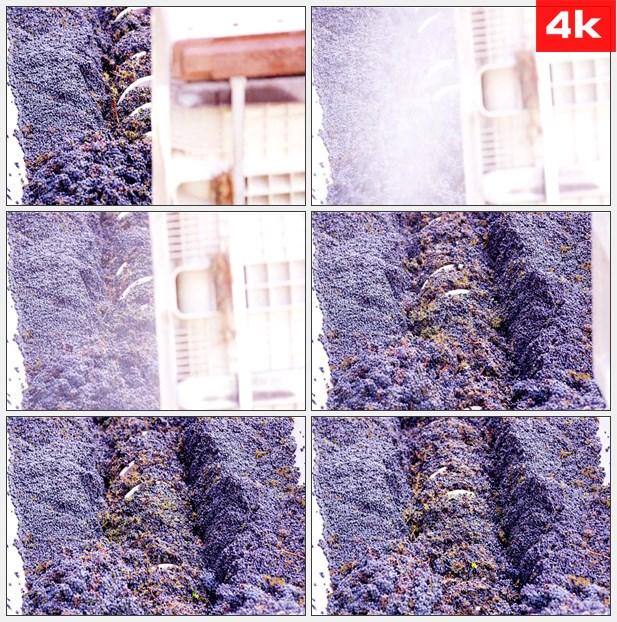 4K0265葡萄机械加工 高清实拍视频素材