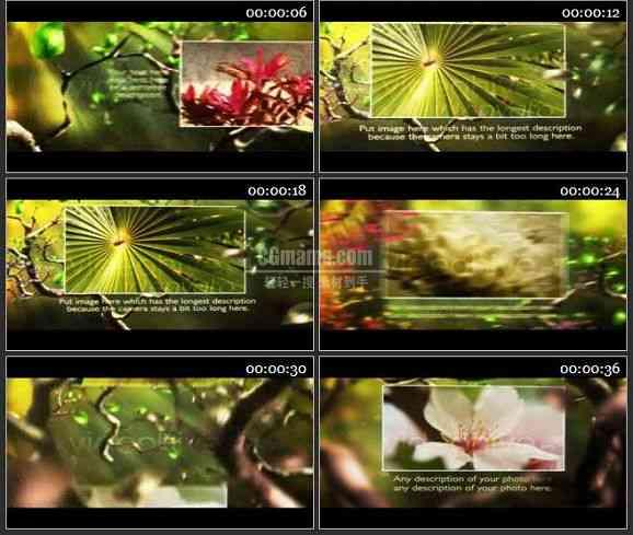 AE0691-美丽的树林 图文展示