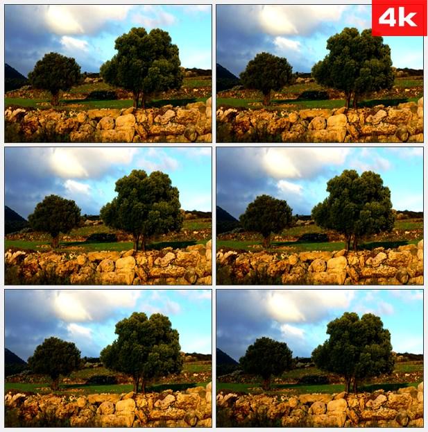 4K0385郊野里随风摇荡的树木 高清实拍视频素材