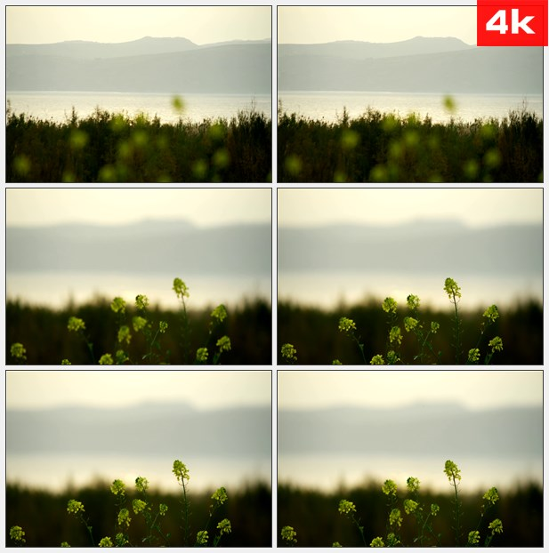 4K0407黄色油菜花特写远山河流 高清实拍视频素材
