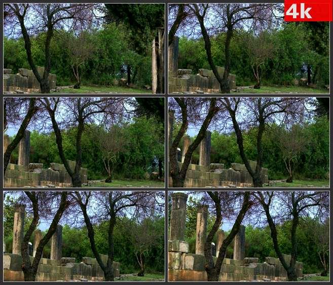 4K0523古老建筑残垣遗址古迹大树 高清实拍视频素材