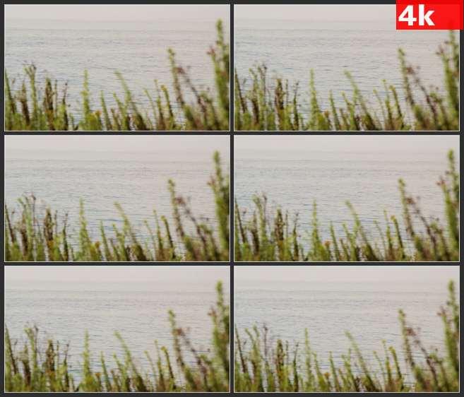 4K0548浮动的海面 高清实拍视频素材