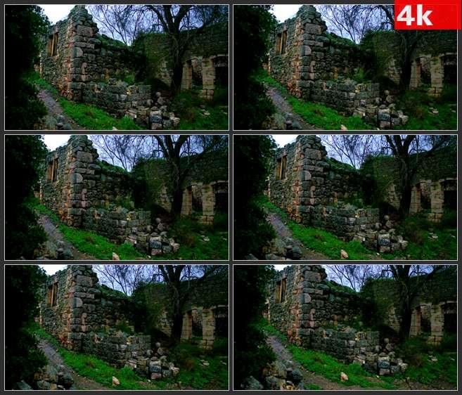 4K0560废墟中生长的植物 高清实拍视频素材