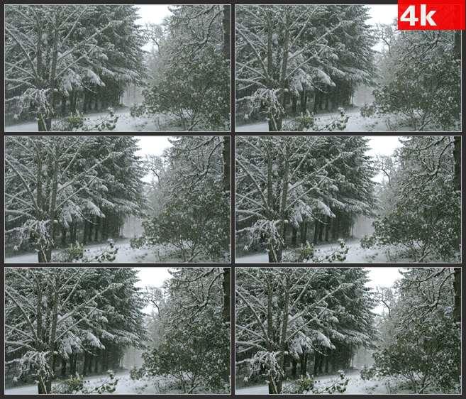4K0604大雪中的俄勒冈的森林 高清实拍视频素材