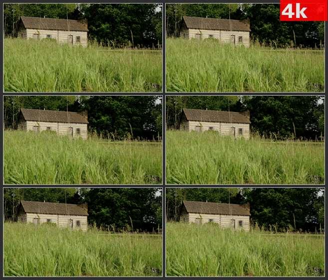 4K0644草丛中的木房子 高清实拍视频素材