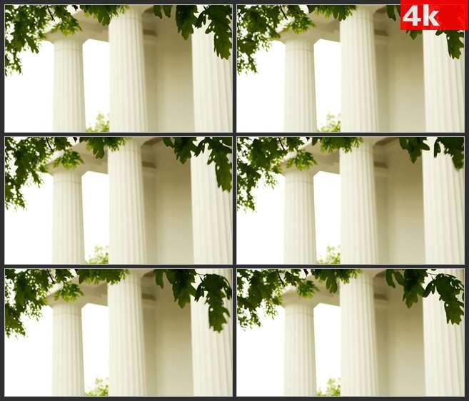 4K0687白色柱子前微风吹动着树叶 高清实拍视频素材