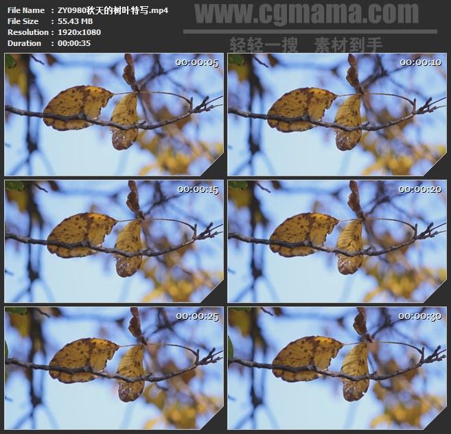ZY0980秋天的树叶特写高清实拍视频素材
