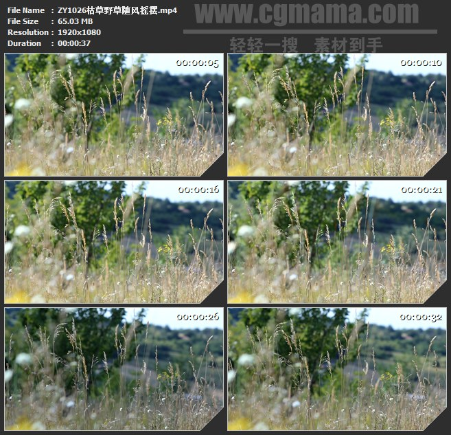 ZY1026枯草野草随风摇摆高清实拍视频素材