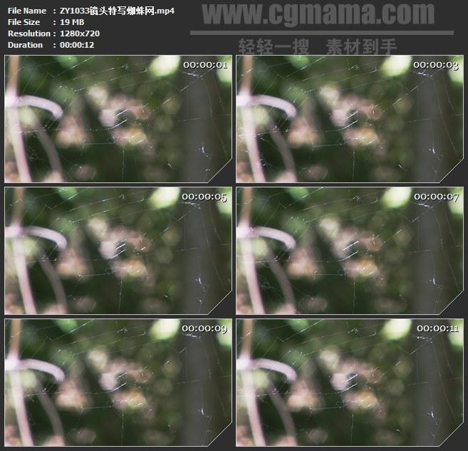 ZY1033镜头特写蜘蛛网