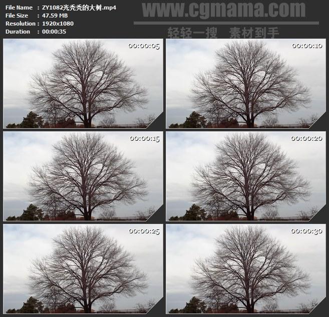 ZY1082光秃秃的大树高清实拍视频素材