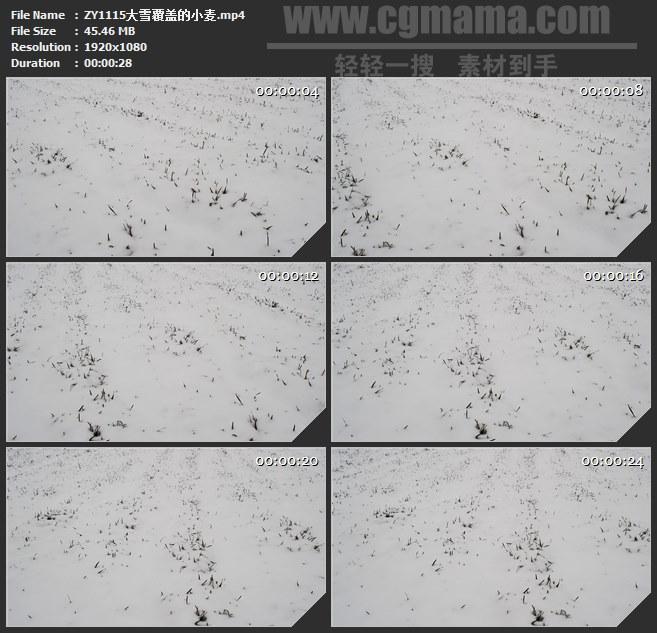 ZY1115大雪覆盖的小麦瑞雪兆丰年高清实拍视频素材