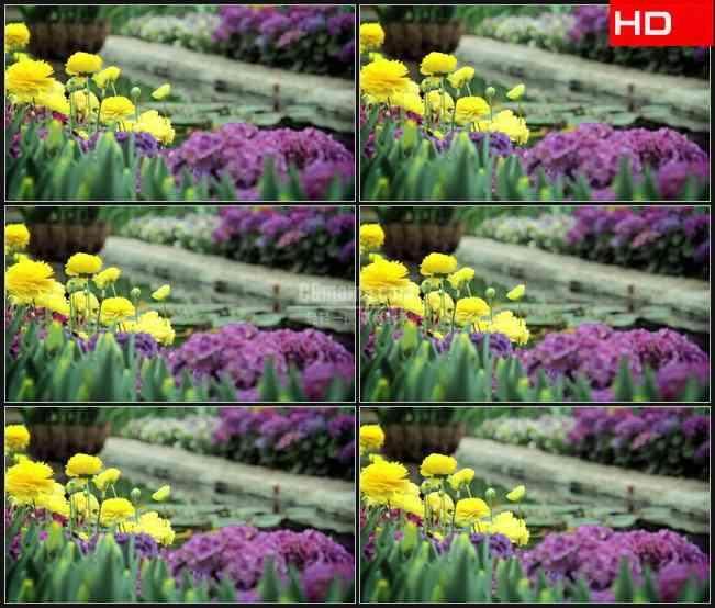 BG0327-春天花朵花园游泳池水流高清LED视频背景素材