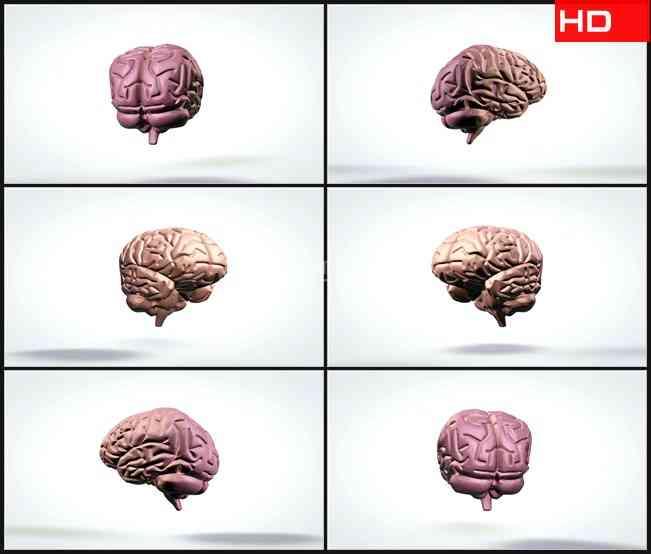 BG0725-三维旋转脑解剖模型白色背景高清LED视频背景素材