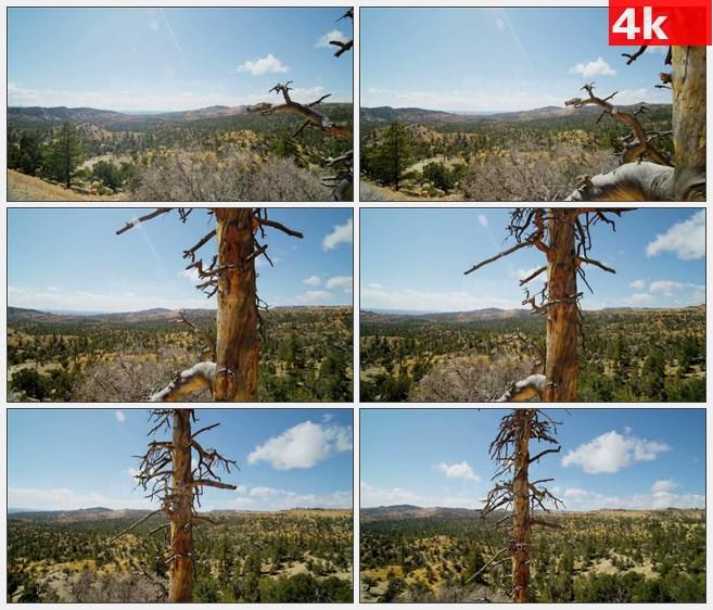4K0803布莱斯峡谷公园山谷树木森林自然美景高清实拍视频素材