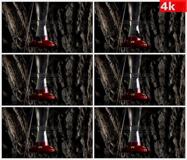 4K0910蜂鸟觅食飞舞高清实拍视频素材