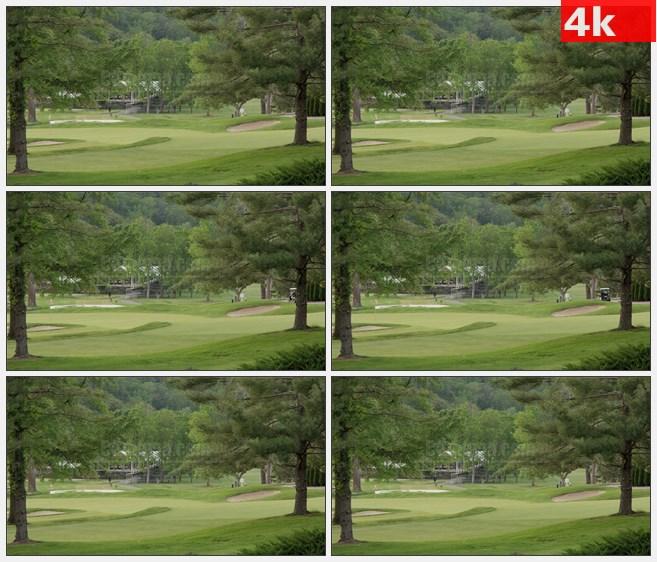 4K0920高尔夫球场草地树木松树高清实拍视频素材
