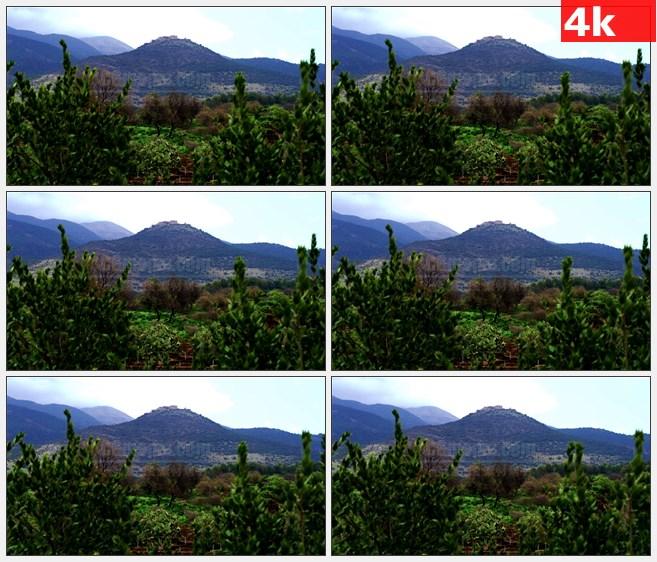 4K0925高山树木树林仙人掌灌木自然美景高清实拍视频素材