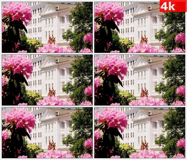 4K1017花园粉色花朵绿叶美丽景色高清实拍视频素材