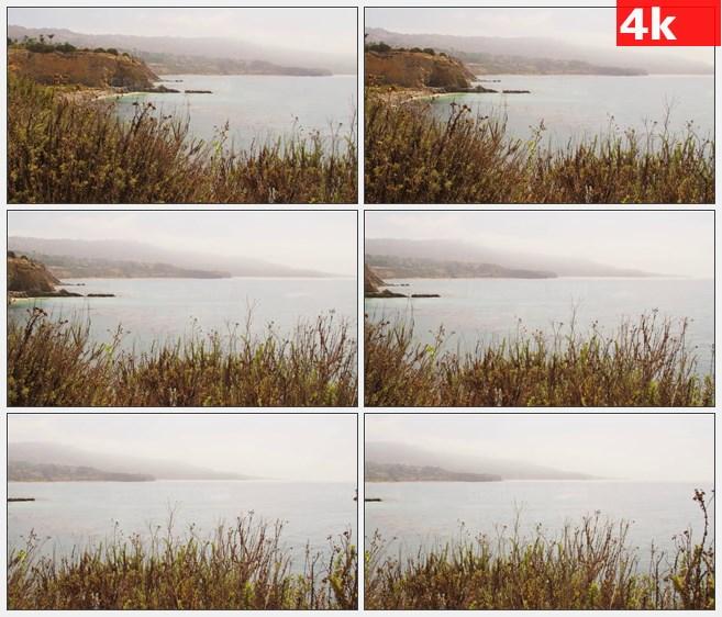 4K0961海岸港口灌木高清实拍视频素材