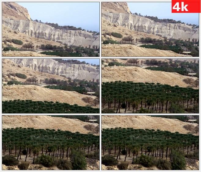 4K1025荒山土地树木自然景观高清实拍视频素材