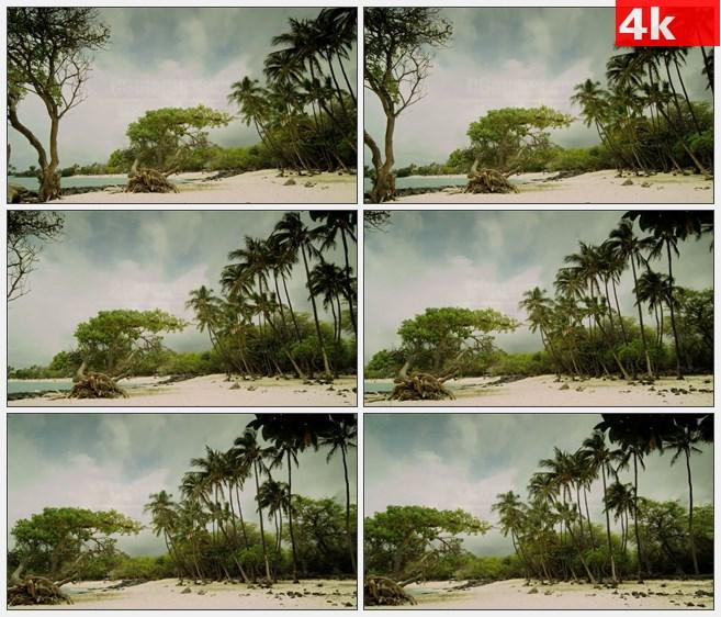 4K0966海边沙滩棕榈树椰子树高清实拍视频素材