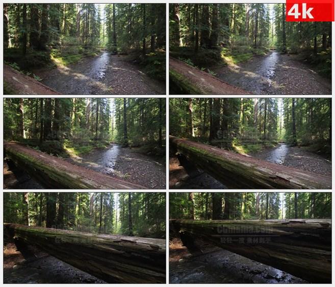 4K1003红木森林树干下的小溪河流鹅卵石高清实拍  视频素材