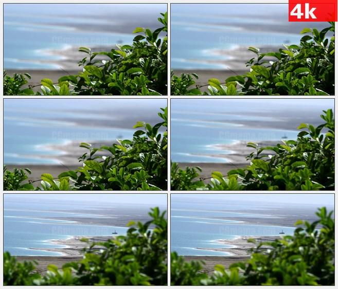 4K1120绿色植物树木朦胧海洋海滩背景风景高清实  拍视频素材