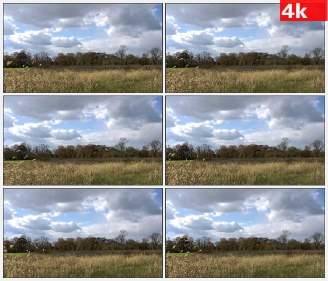 4K1084蓝天白云野外灌木草丛狗尾草高清实拍视频素材