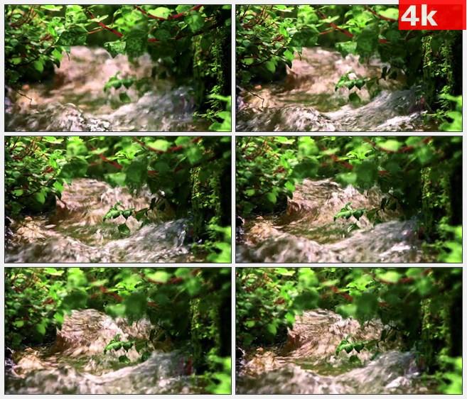4K1090林间溪流绿色灌木树叶高清实拍视频素材