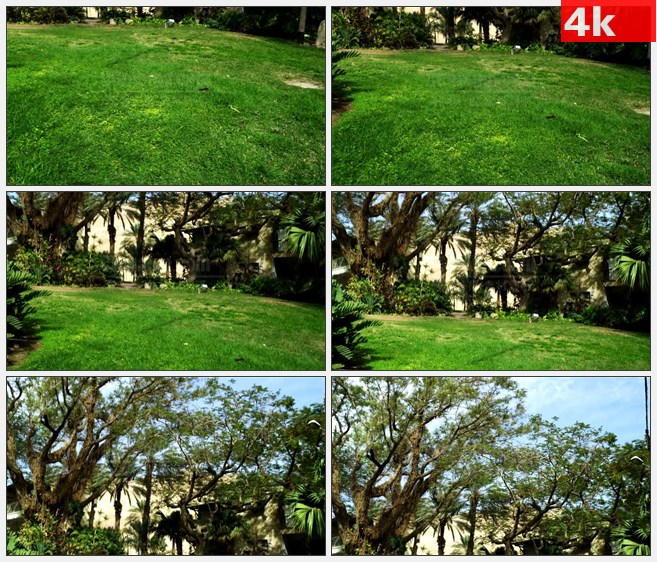 4K1110绿色草坪树木房屋自然美景高清实拍视频素材