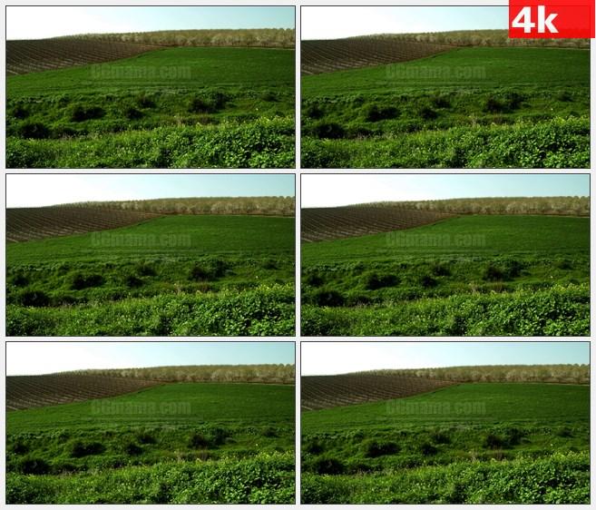 4K1111绿色的田野果园自然风景高清实拍视频素材