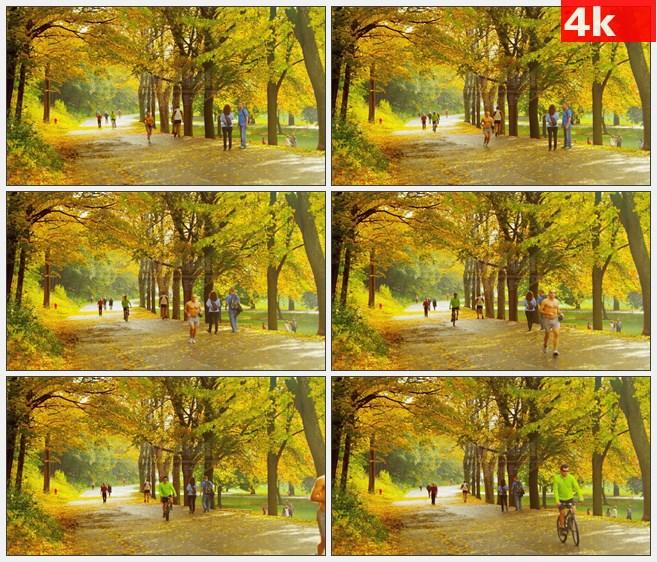 4K1230蒙特利尔公园跑步锻炼落叶街道高清实拍视频素材