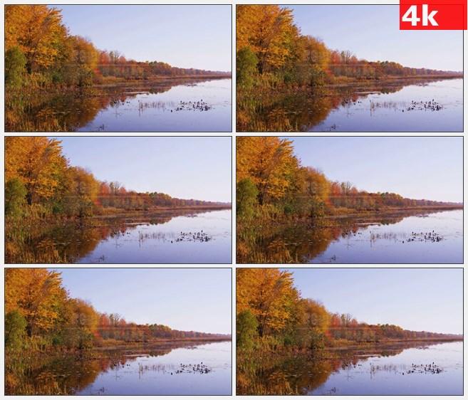 4K1234蒙特利尔湖秋天彩叶树湖泊残败荷花美景高清实拍视频素材