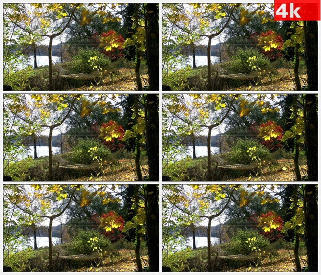4K1400特拉华河秋天黄色红色彩叶树河流吊床浪漫自然美景高清实拍视频素材