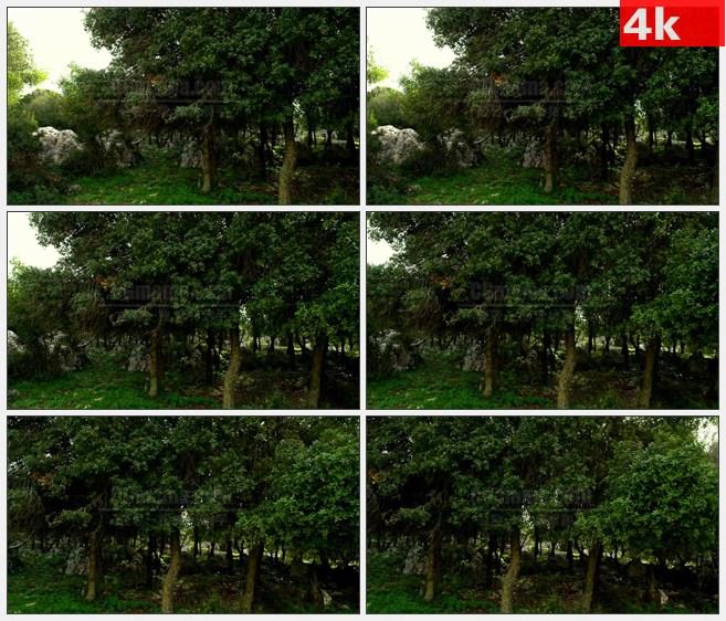 4K1404天然氧吧原生态森林树木高清实拍视频素材