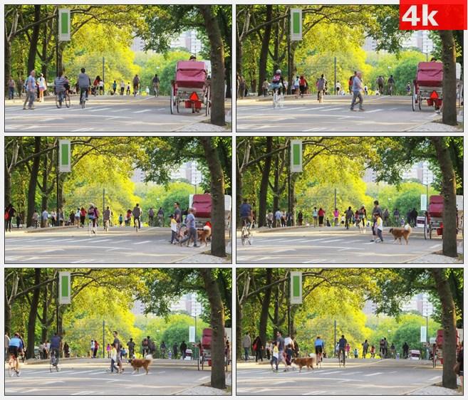 4K1458行人走过美国中央公园高清实拍视频素材