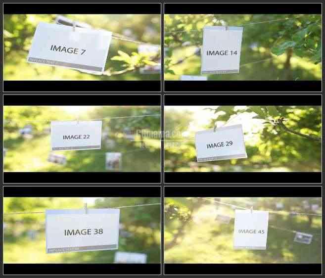 AE2526-户外实景 悬挂在树林中的照片 相册