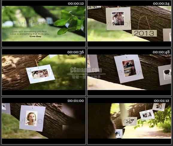 AE1449 爱情之树婚礼模板 相册